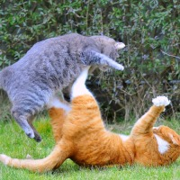 Yet another cat fight between Google and Microsoft